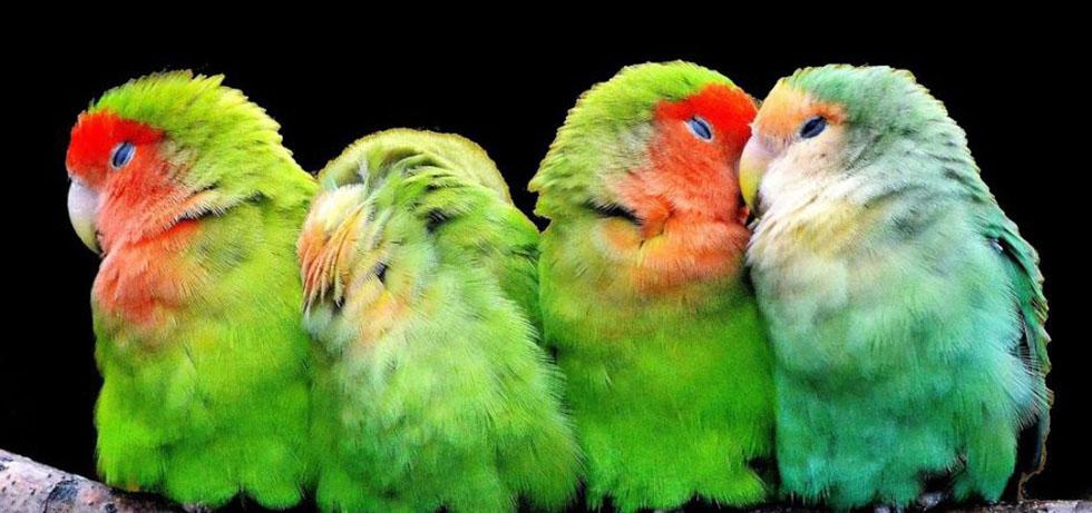 Vögel2-947x445