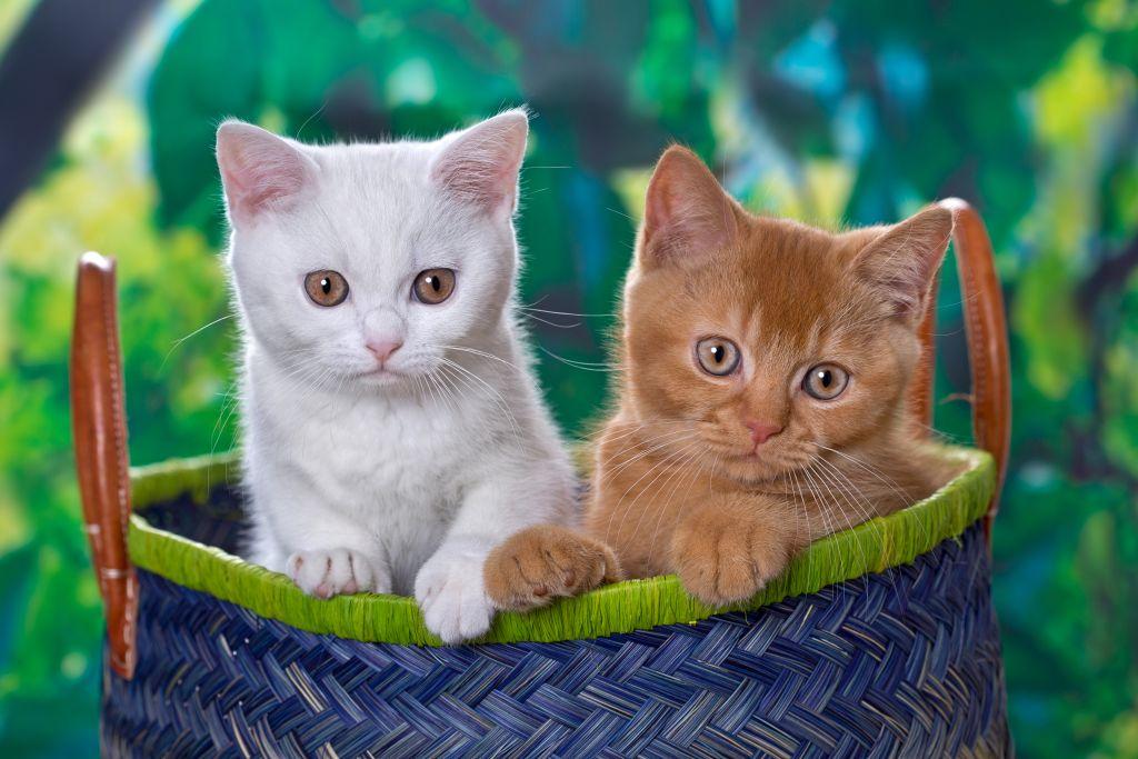 Katzen6